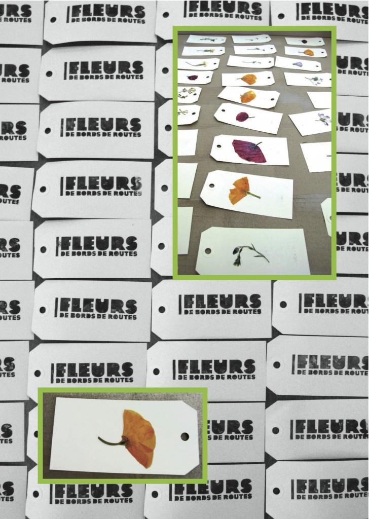 Image herbier etiquettes